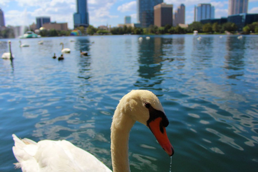 Downtown Orlando Farmers Market Lake Eola